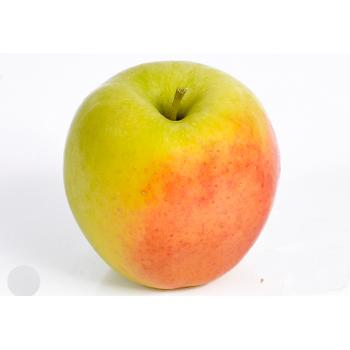 Яблоня Голден Оранж