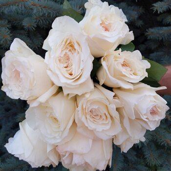 Роза Принцесса Миюки